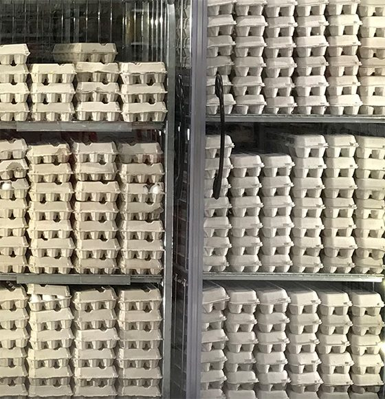 Assorted cartons of eggs piled up