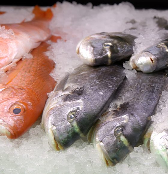 Fresh Red snapper fish and king mackerel fish on ice  in the seafood section