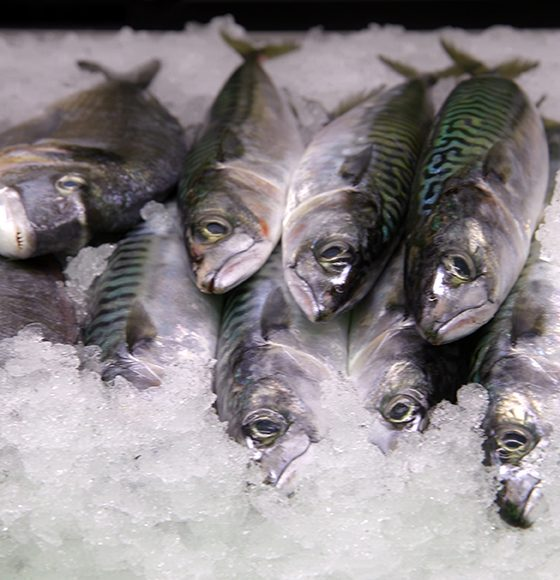 King fish on ice in the seafood section